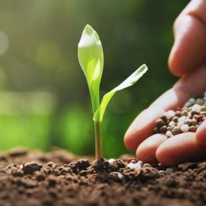 Wachstum & Pflege (Symbolbild)