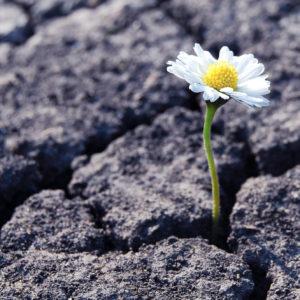 Resilienz (Symbolbild)