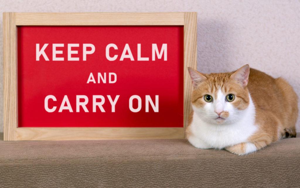 """Schild mit Aufschrift """"Keep calm an carry on"""" nebst Katze"""
